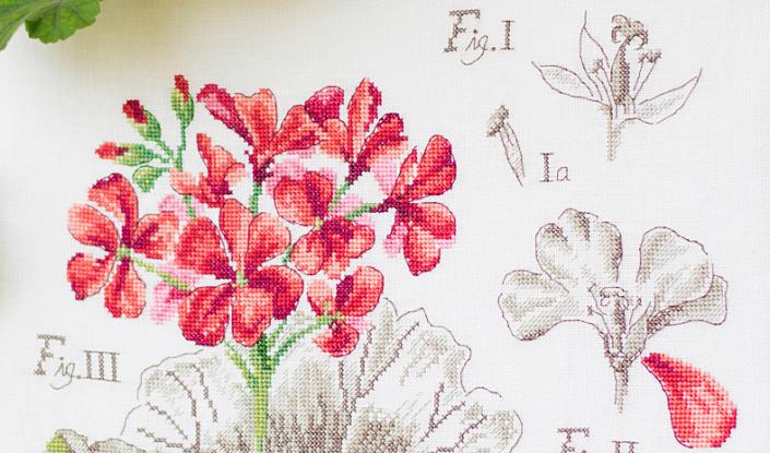 Ботанический этюд «Герань»